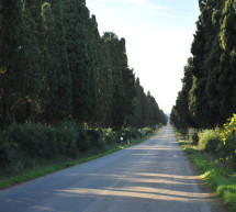 Bolgheri. A village of excellence